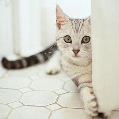 le-cattive-abitudini-del-gatto-040001040680_avorigb